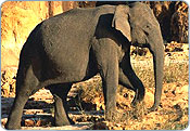Elephant - Bandhavgarh National Park
